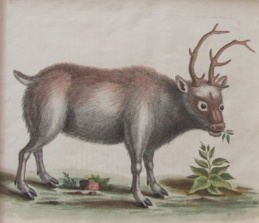 012913_Edwards_Reindeer